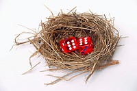 Bird nest with pair of red dice