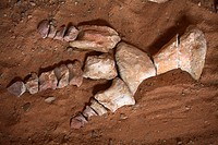 Dinosaur's remains found in the Gobi Desert, Mongolia