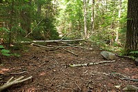 Pemigewasset Wilderness - Remnants of the old East Branch & Lincoln Railroad bed near Lincoln Brook  Located in Franconia, New Hampshire USA this was ...