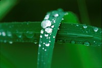 Water drop on blades of grass