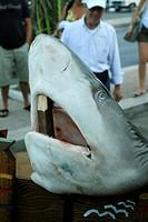 squalo morto, lampedusa, isole pelagie, sicilia