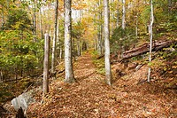 Osseo Trail during the autumn months in Lincoln, New Hampshire USA