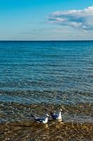 Seagulls, St  Kilda Beach, Melbourne, Victoria, Australia
