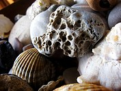 seashells in Sitges, Catalonia, Spain