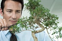 Businessman pruning bonsai tree