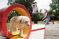 Germany, Bavaria, Ammersee, Young couple playing mini golf, dog in foreground (thumbnail)