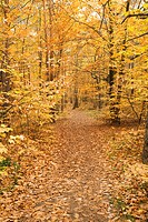 Germany, Rhineland_Palatinate, Wood, leaves, autumn colours