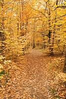 Germany, Rhineland_Palatinate, Wood, leaves, autumn colours