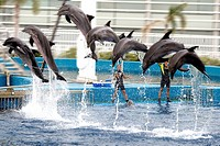 Spain,Valencia,Oceanographic aquarium, dolphins show