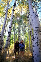 Couple Hiking Through Aspens