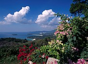 Asia, Thailand, Phuket, Landscape, Flower blossom in foreground