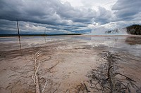 USA, Wyoming, Yellowstone National Park, Grand Prismatic Spring with dead trees