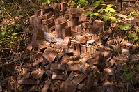 Pile of Bricks in Underbrush