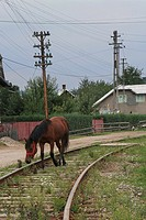 A solitary horse in train tracks