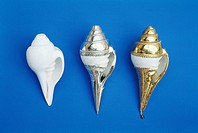 Natural occurring conch by side of silver and gold ones used in Nagarathar´s festivities , India