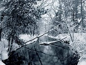 River flowing through a snow covered forest