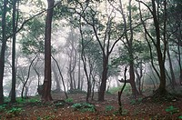 Forest in mist , Matheran , Maharashtra , India