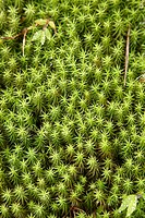 Plant, Antoetra, Fianarantsoa Province, Madagascar