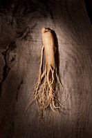 close_up of Ginseng root