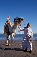 Camel Riding, Beach at Giftun Village, Hurghada, Red Sea, Egypt