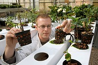Plant milking technology. Researcher inspecting a hydroponic crop unit in a Plant Advanced Technologies PAT greenhouse. PAT have developed a method fo...
