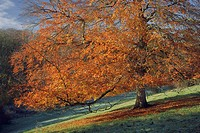 England, Gloucestershire, Westonbirt Arboretum, Autumn foliage at Westonbirt Arboretum