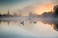 England, Buckinghamshire, Marlow, Swans at dawn in the mist with rowing boat at Marlow. Marlow is Anglo Saxon and means ´land remaining after the drai...