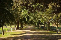 The Avenue at the common in Beccles , suffolk , Uk