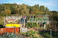 The allotments near the common in Beccles , suffolk , Uk
