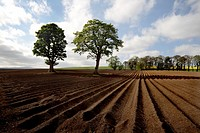 Looking out across a ploughed field. Fettercain is well known to anyone who listens to Radio Scotland traffic broadcasts in winter because it lies at ...