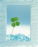 Four leaf clover in white frame