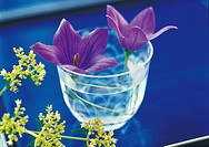 Chinese bellflowers in a glass of water