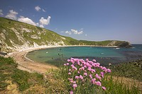England, Dorset, Lulworth Cove, Thrift Armeria maritima growing on the cliffs above Lulworth Cove the Jurassic Coast World Heritage Site in Dorset