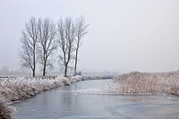 England, Norfolk, Ludham, A frozen river with trees on a frosty morning in Norfolk.