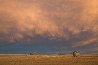 alberta, canada, a wooden shack on a cut wheat field with a dramatic cloudy sky at sunset