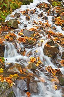 water cascading over rocks covered in leaves in autumn