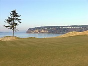 Golf flag and ball on putting green at Chambers Bay Golf Course, Tacoma, Washington, USA, solitary tree and Puget Sound in background