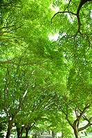 Trees with green leaves, Tokyo prefecture, Japan