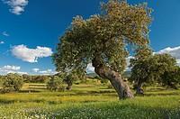 Landscape, Badajoz province, Extremadura, Spain
