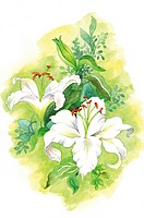 Flower, Watercolor painting of blossom
