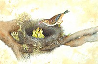 Animal, Watercolor painting of a bird feeding young birds in the nest
