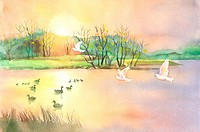 Animal, Watercolor painting of ducks and birds in nature