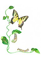 Insects, Watercolor painting of caterpillar and butterfly