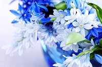 Blue bouquet of first spring flowers close up