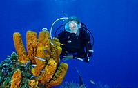 Scuba diver on colorful coral reef, Pseudoceratina crassa, Caribbean Sea, Cayman Islands