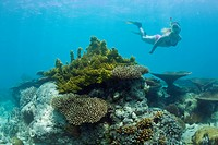 Skin Diver over Corals in Bikini Lagoon, Bikini Atoll, Micronesia, Pacific Ocean, Marshall Islands