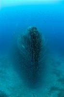 Bow of Destroyer USS Lamson, Bikini Atoll, Micronesia, Pacific Ocean, Marshall Islands