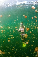 Swimming with harmless Jellyfishes, Mastigias papua etpisonii, Jellyfish Lake, Micronesia, Palau