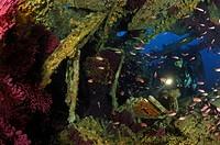 Diver at Freighter Le Donateur, Ile de Porquerolles, Hyeres, Cote d´Azur, France