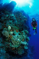 Scuba Diving in Sinai, Sharm el Sheikh, Sinai, Red Sea, Egypt